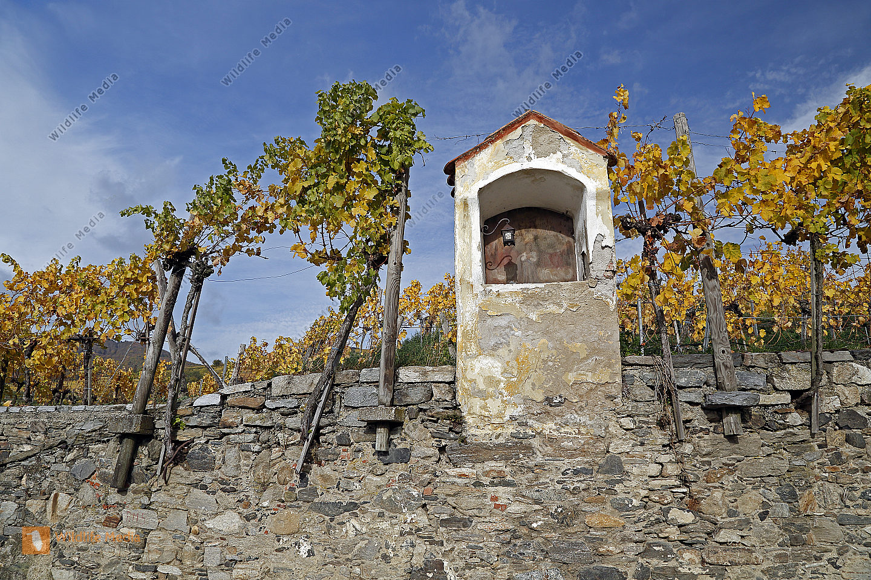 Bildstock mit buntem Weinlaub