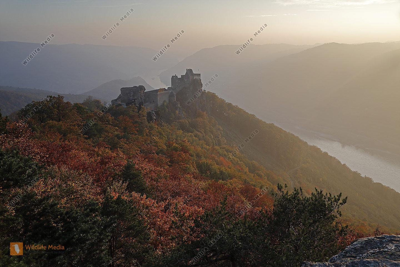 Burgruine Aggstein im Herbst
