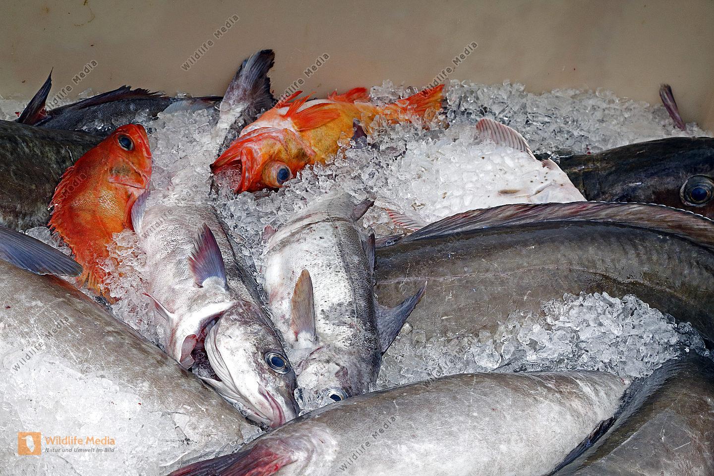 Fischmarkt in Island