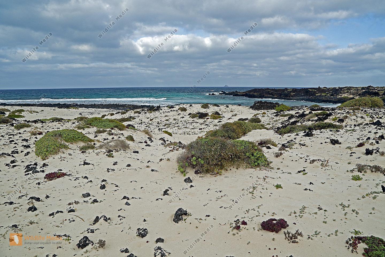 Strand in Lanzarote