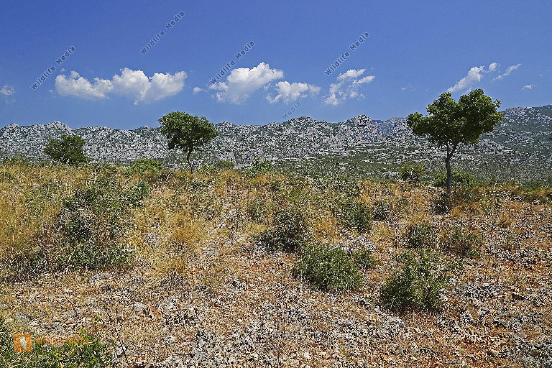 Felslandschaft Kroatien