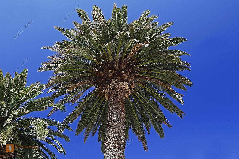 Palme in Kroatien