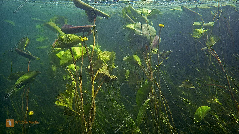 Zrmanja Wasserfälle Unterwasser