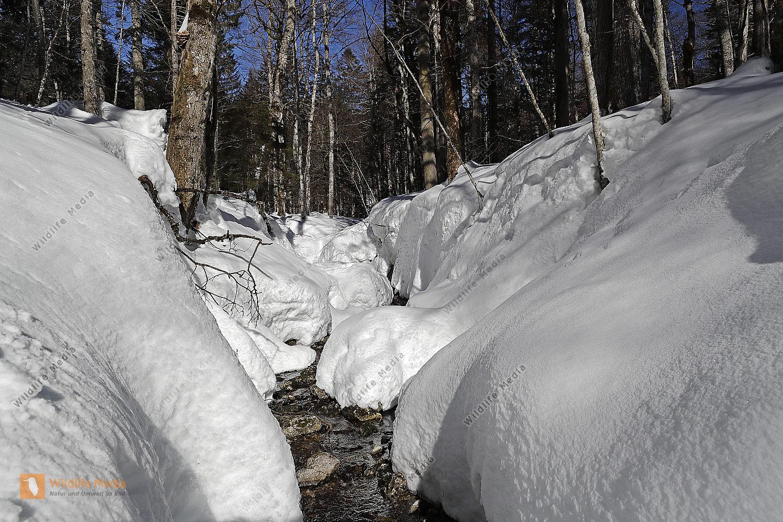 Europäischer Primärurwald im Winter
