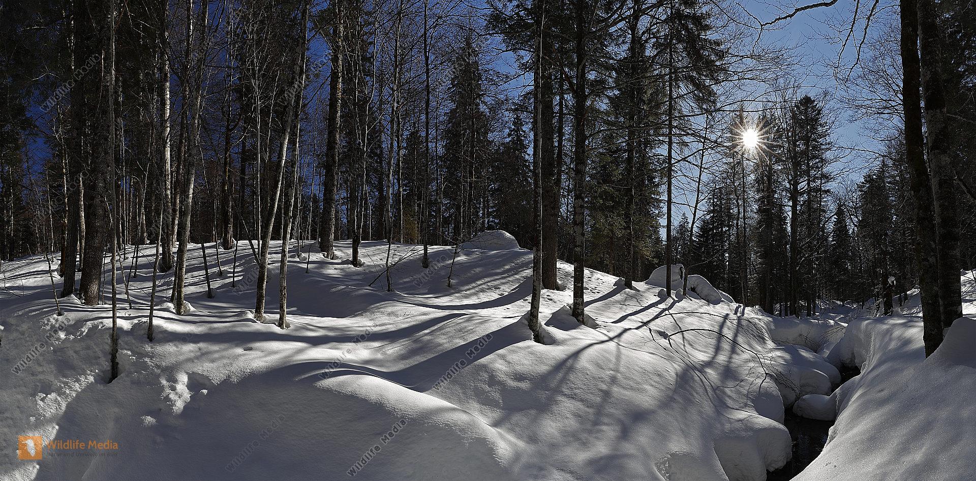 Großer Urwald im Winter Panorama