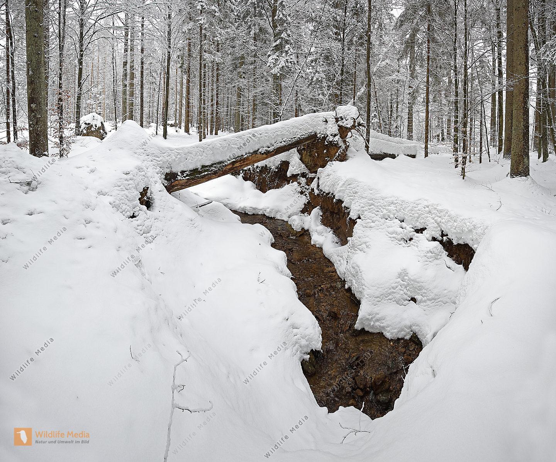 Bayerischer Wald Panorama