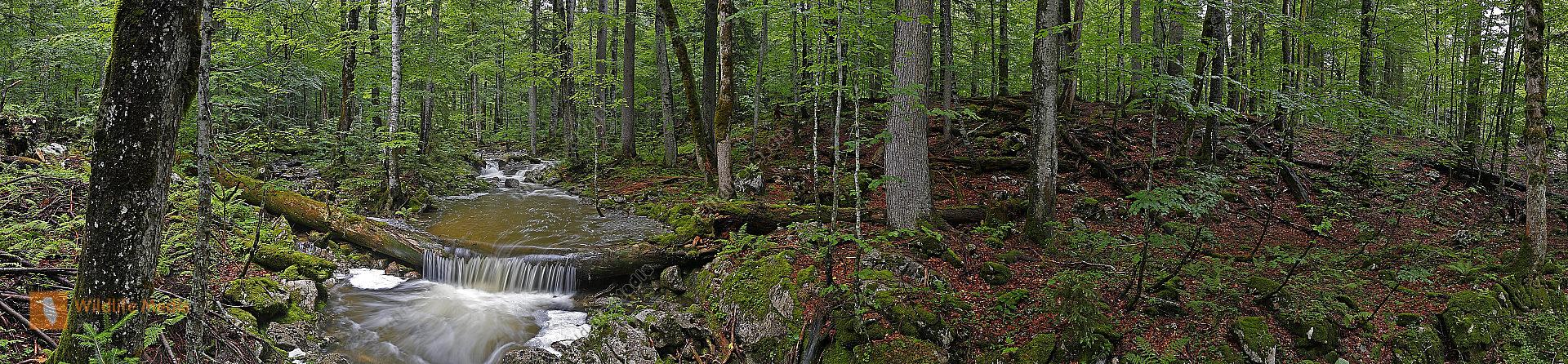 Großer Urwald Sommer Panorama