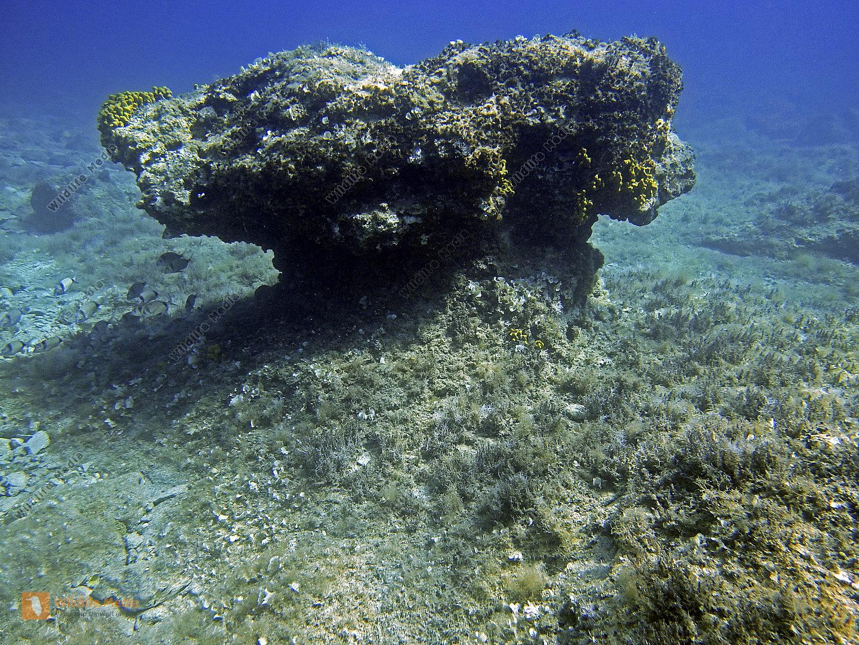 Mittelmeer Unterwasser