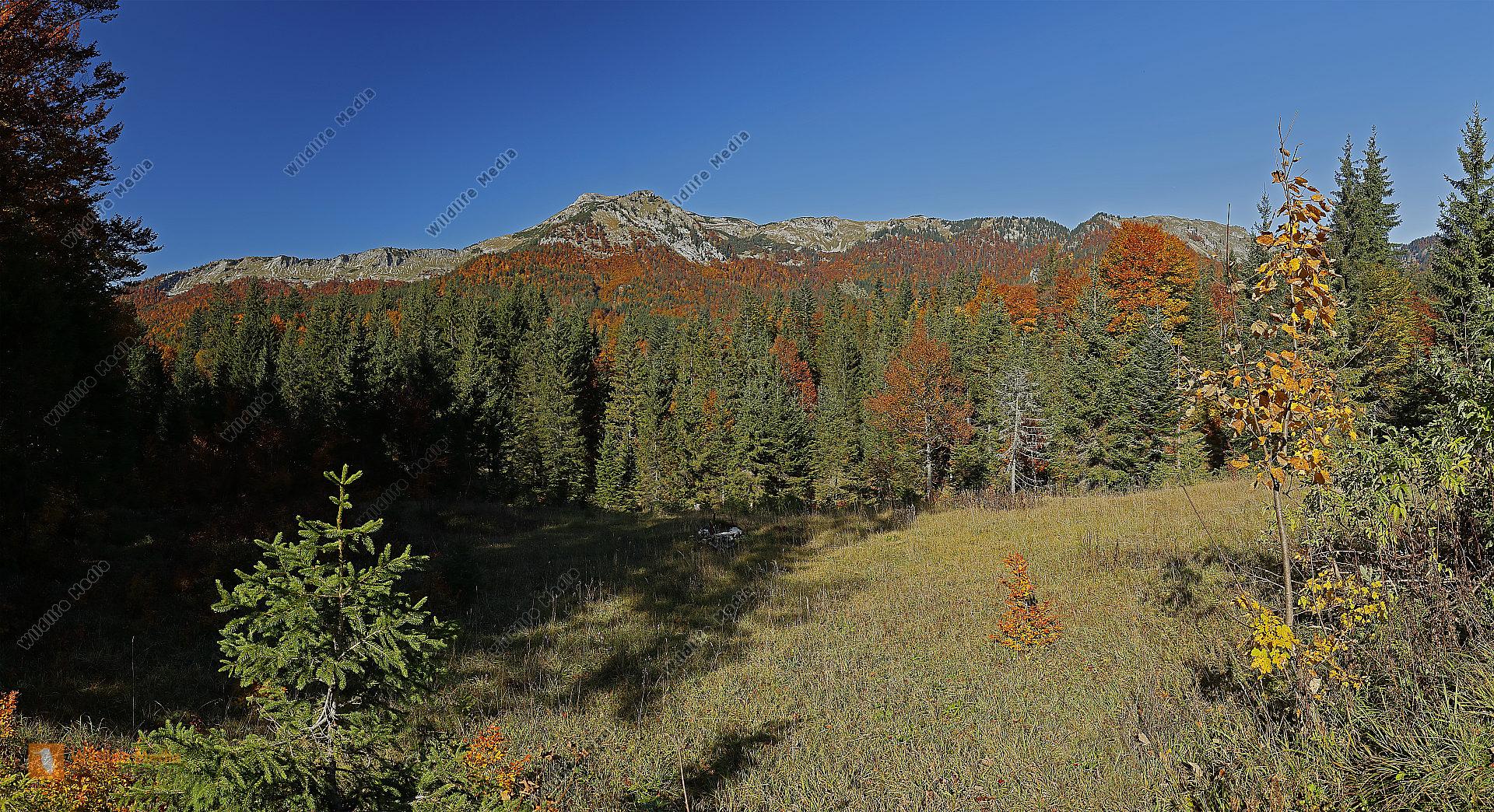 Dürrenstein Panorama Herbst
