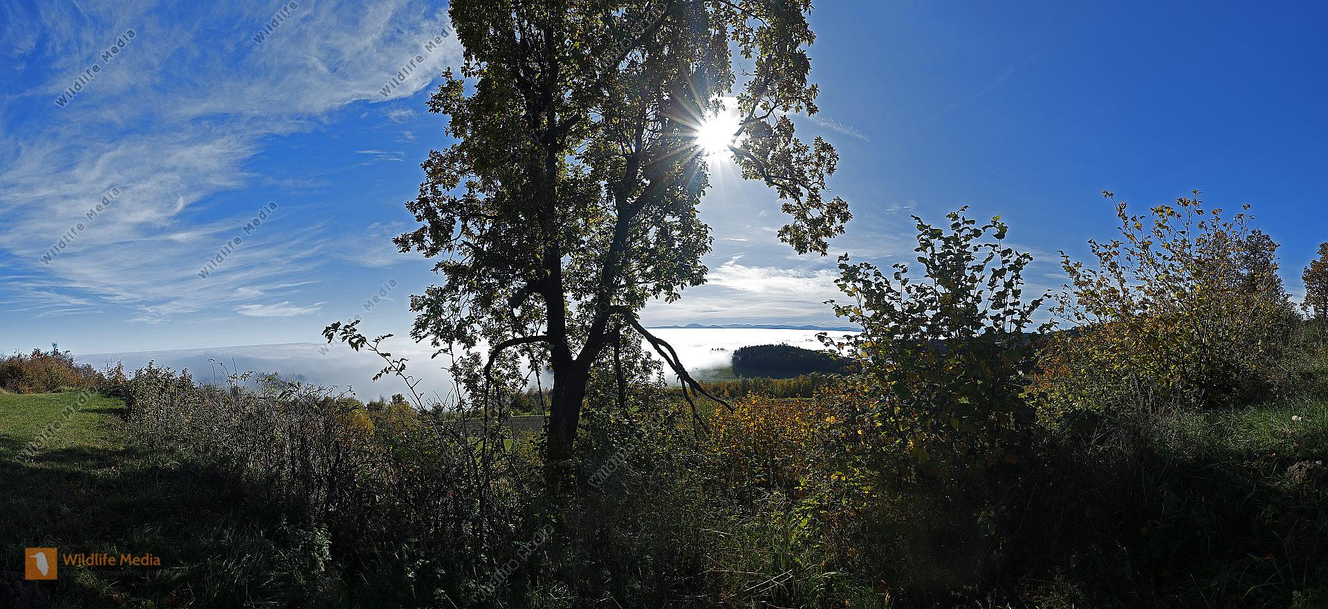 Jauerling im Herbst Panorama