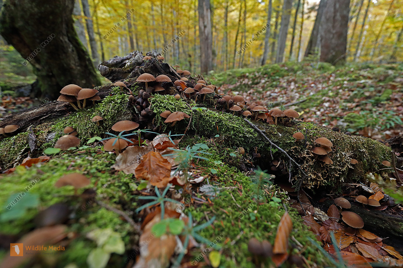 Baumpilze im Urwald