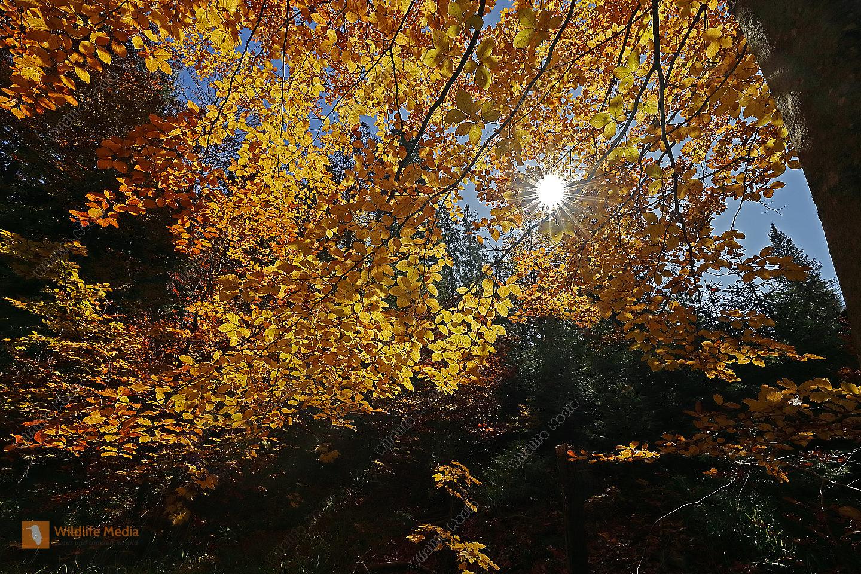 Herbstwald Urwald