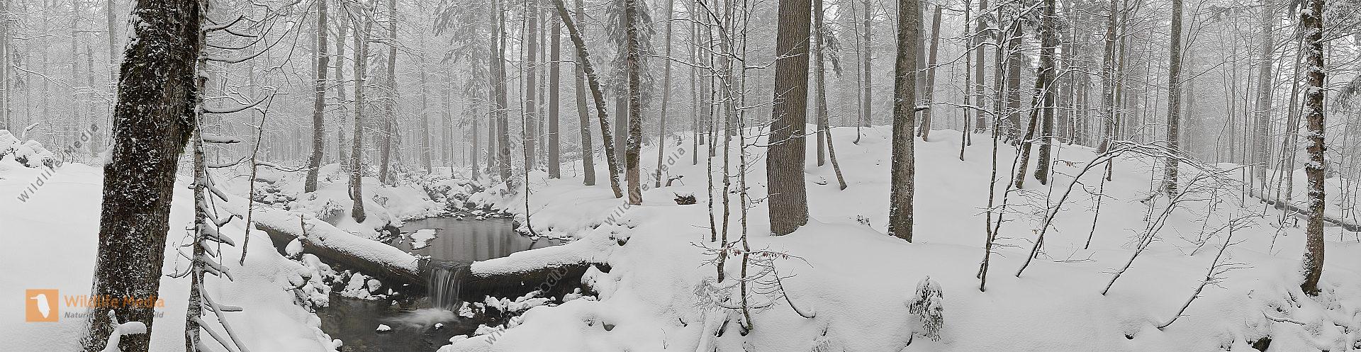 Großer Urwald Winter Panorama