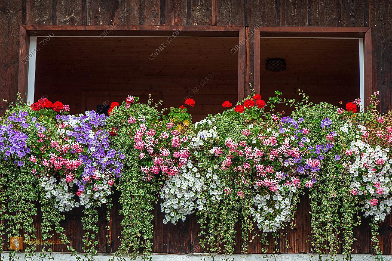 Blumenfenster im Allgäu