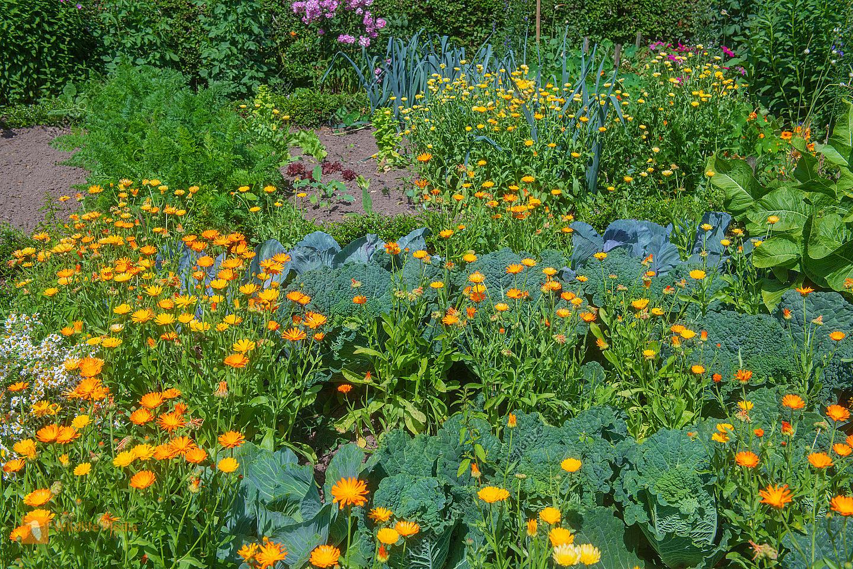 Gemüse- und Blumengarten im Sommer