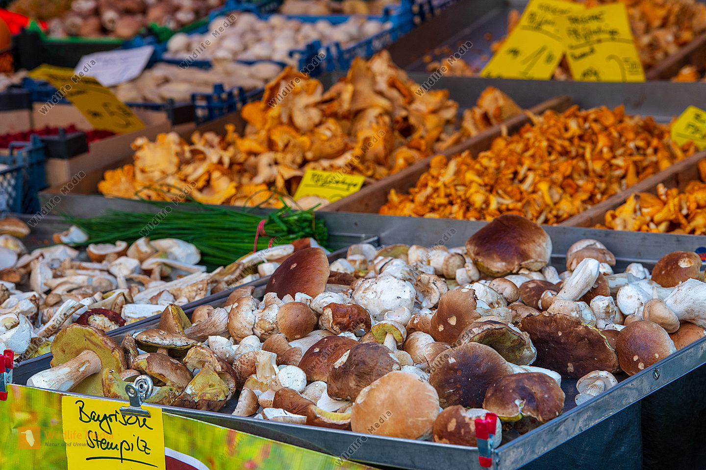 Pilze auf dem Wochenmarkt