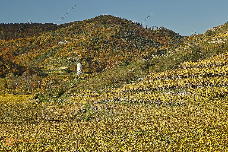 Gelbes Weinlaub Dürnstein