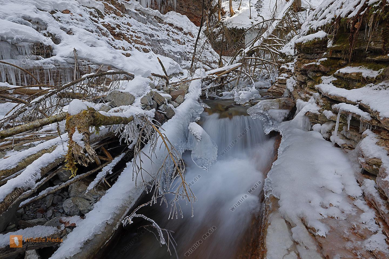 Taugl Winter