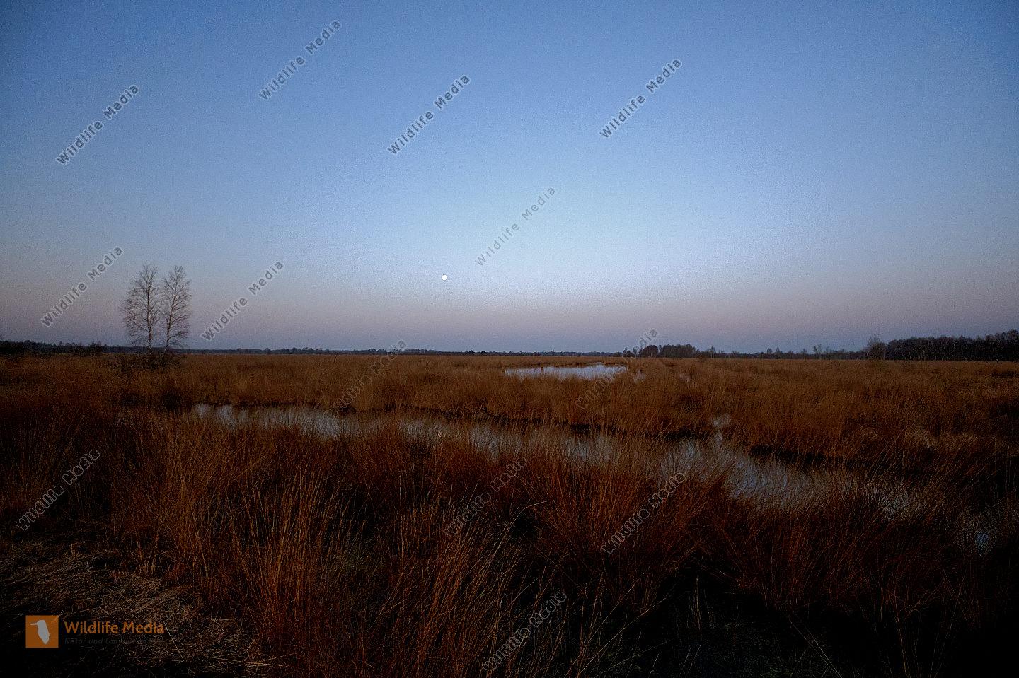 Wesuweer Moor