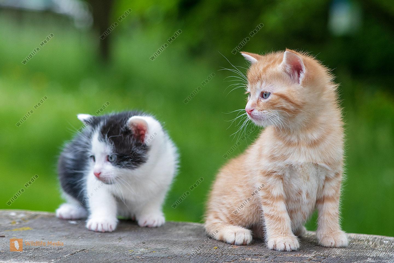 Junge Hauskatzen