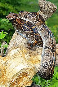 outlet store afd76 05ae5 Reptilien - Wildlife Media ✼ Die Naturbildagentur